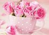 Розы в чашке